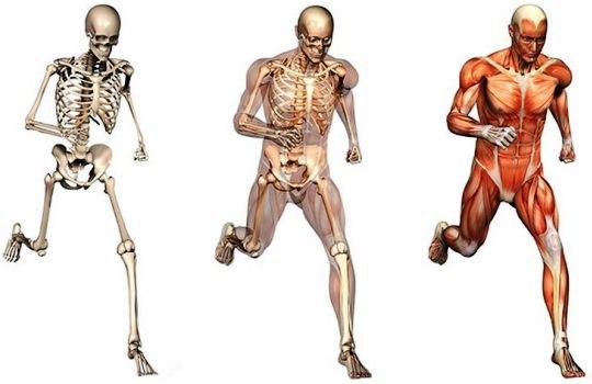 Seluk Beluk Sistem Gerak Aktif pada Manusia yang Perlu Diketahui